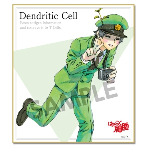Trading Illustration Card - Hataraku Saibou (Cells at Work!)